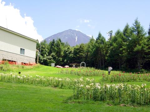 後ろに見える無骨な山は富士山なんだぜ